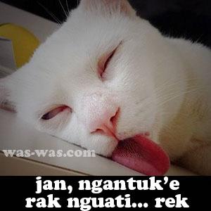 ngantuk lucu 3