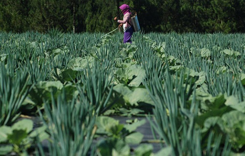 peluang-usaha-pertanian-yang-menjanjikan